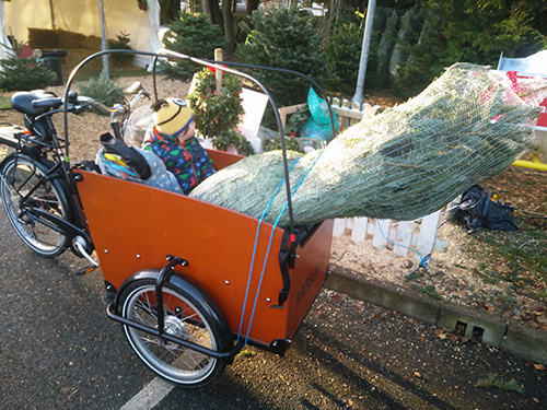 Securing a Christmas Tree in a Babboe Big cargo bike