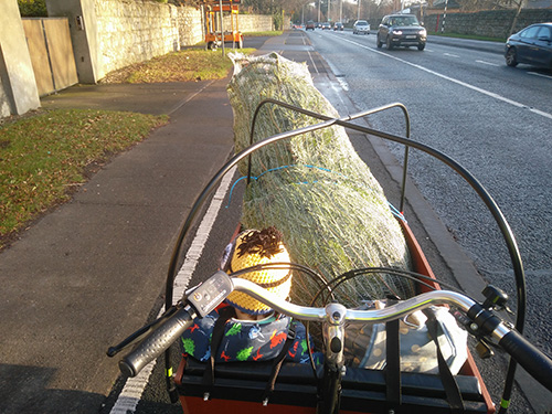 Babboe Big cargo bike carrying a Christmas Tree